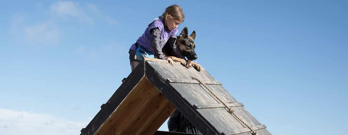 GermanShepherd and Girl on A-frame